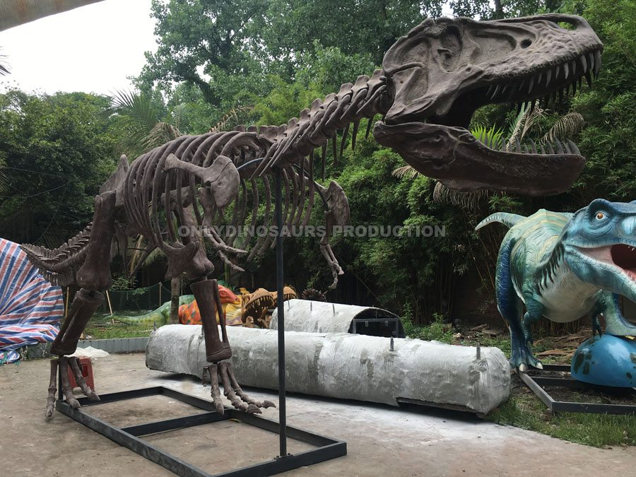 10m Long T-Rex Fossil Replica