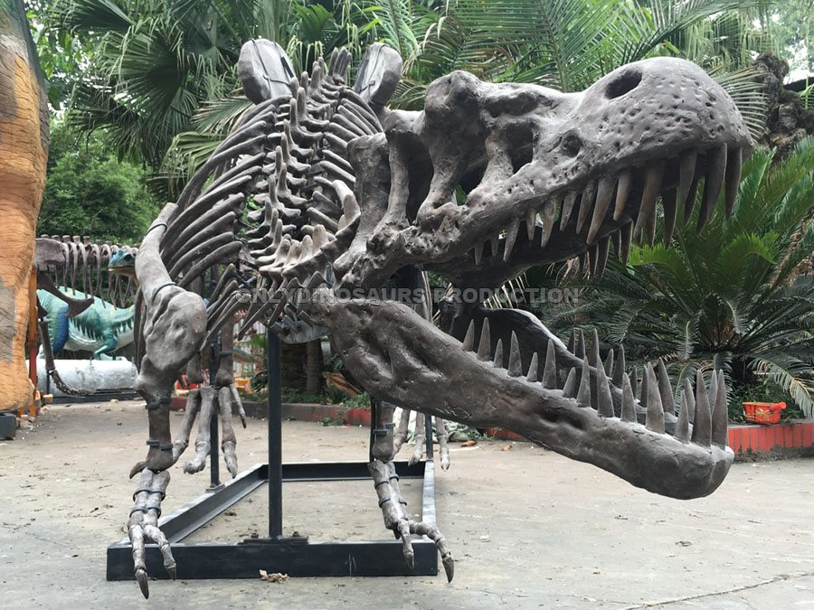 6m Long T-Rex Fossil Replica