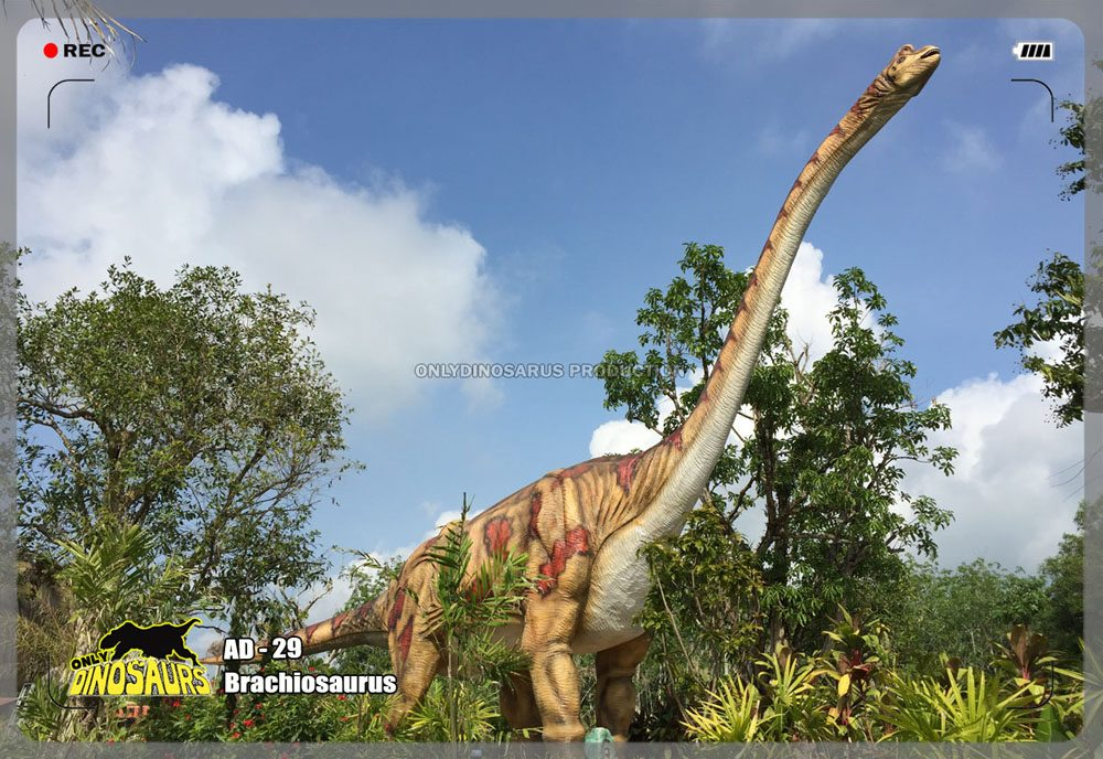 Life Size Brachiosaurus Model