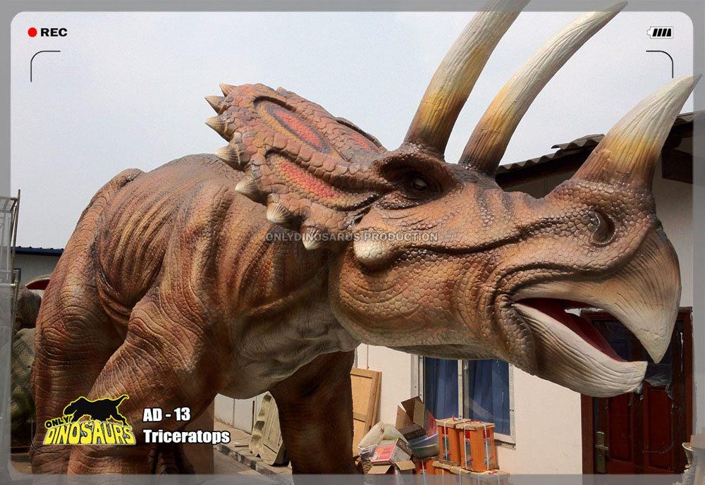 Triceratops Model