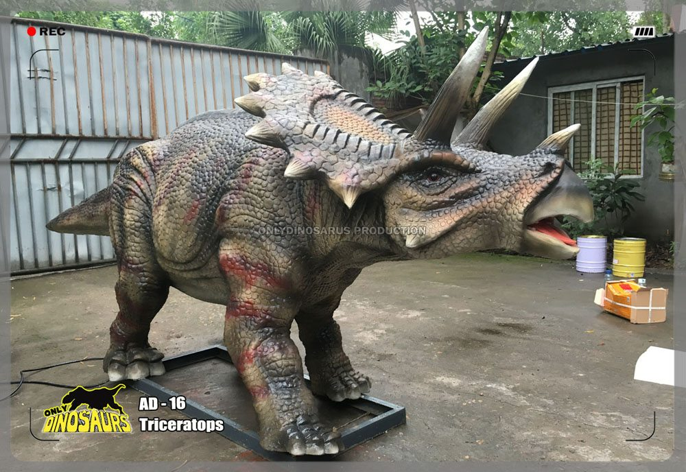 Juvenile Triceratops Animatronics