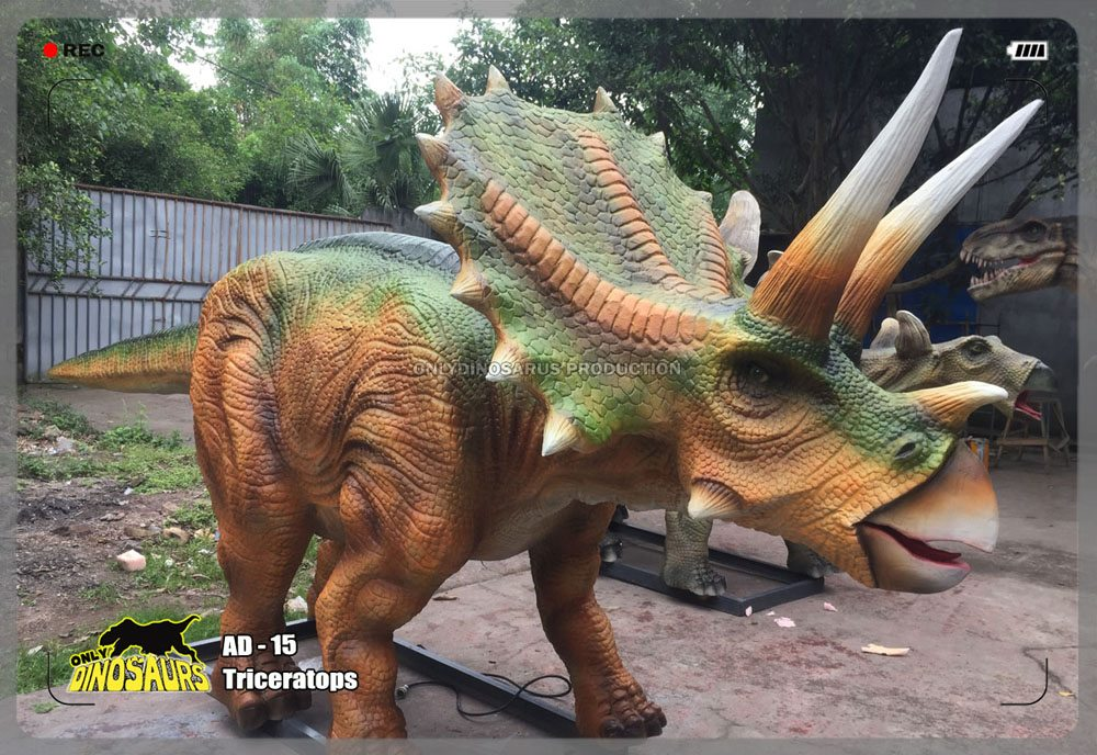 Full Size Triceratops Model