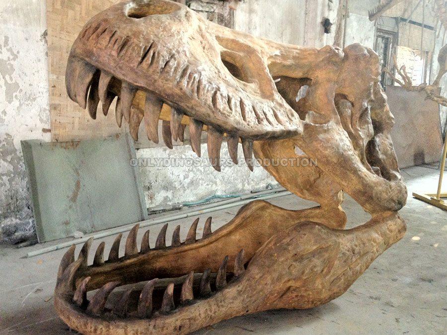 Life Size T-Rex Skull Replica