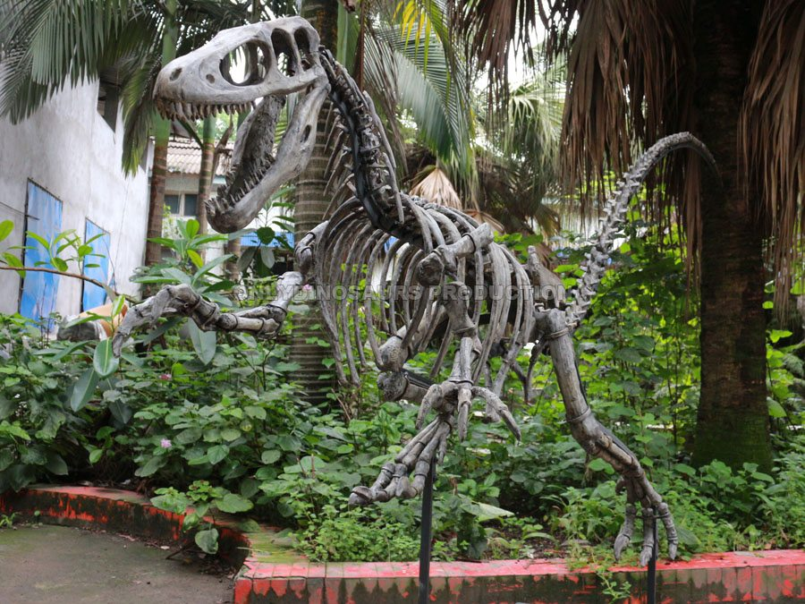 6m Long T-Rex Fossil Replica