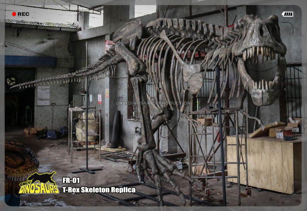 T-Rex Dinosaur Skeleton Replica