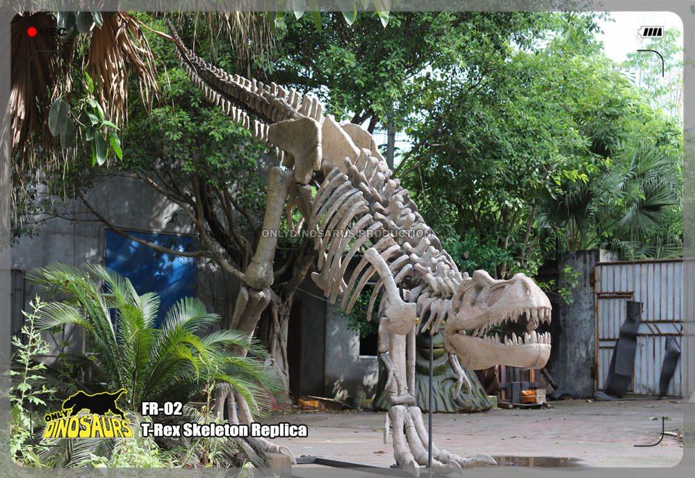 Dinosaur T-Rex Fossil Replica