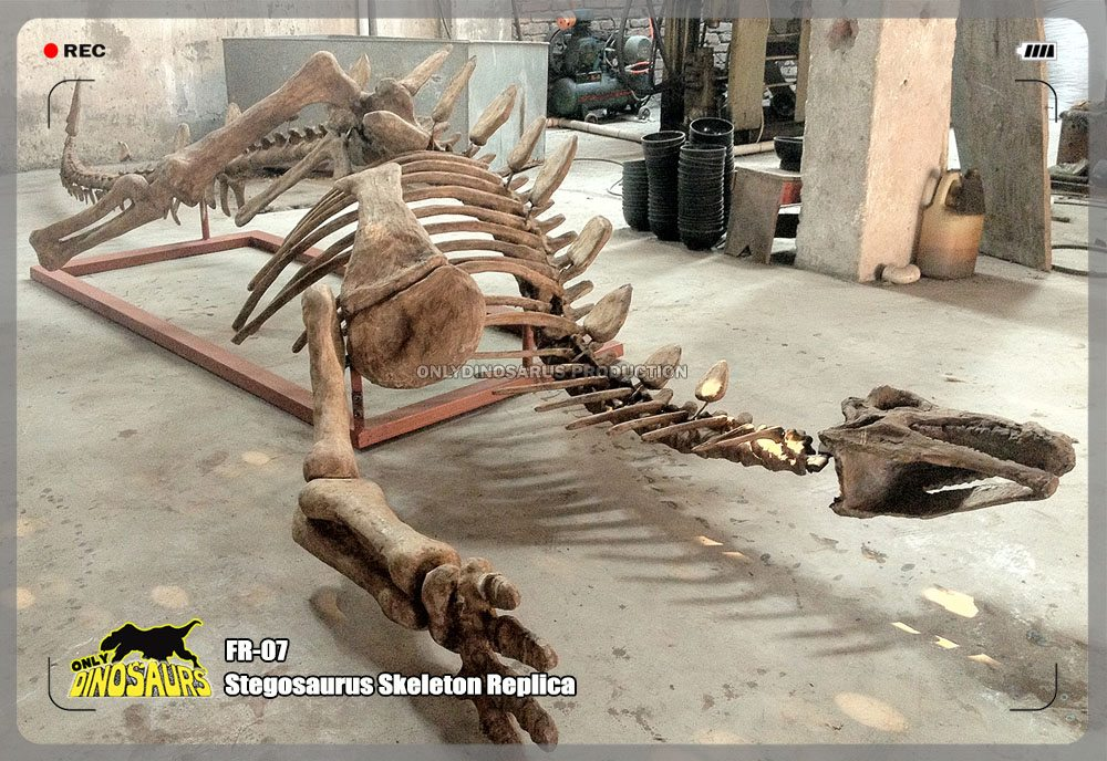 Stegosaurus Skeleton Replica