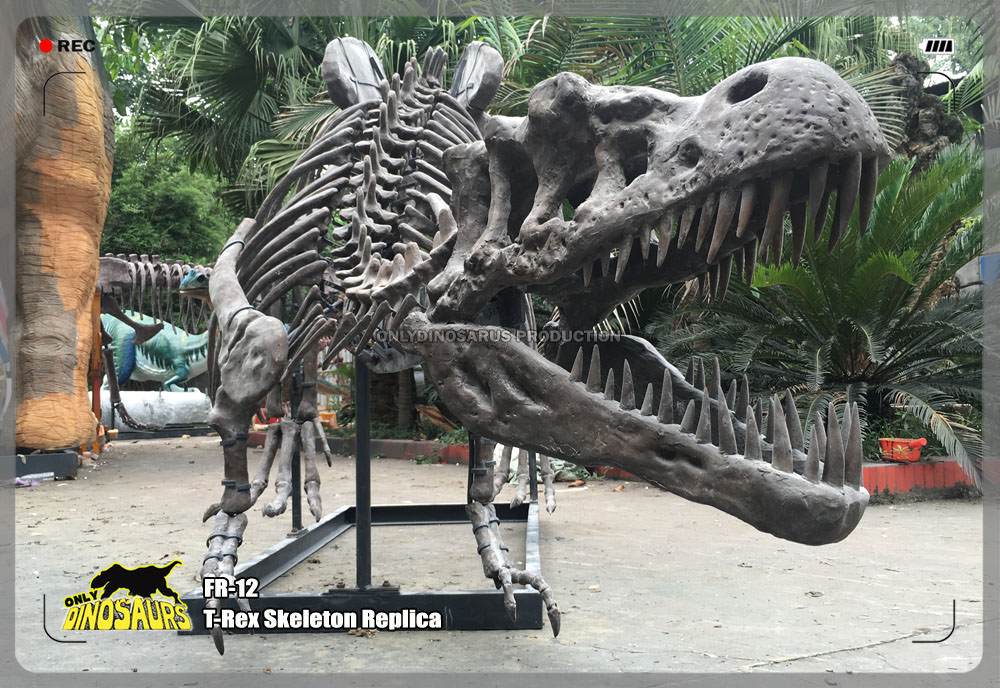 T-Rex Skeleton Replica