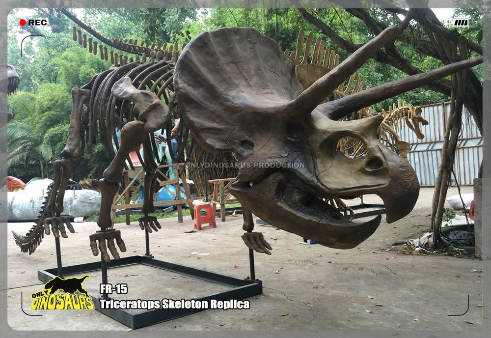 Triceratops Skeleton Replica