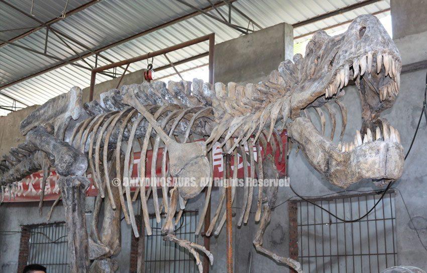 Giant-T-Rex-Skeleton-Replicas