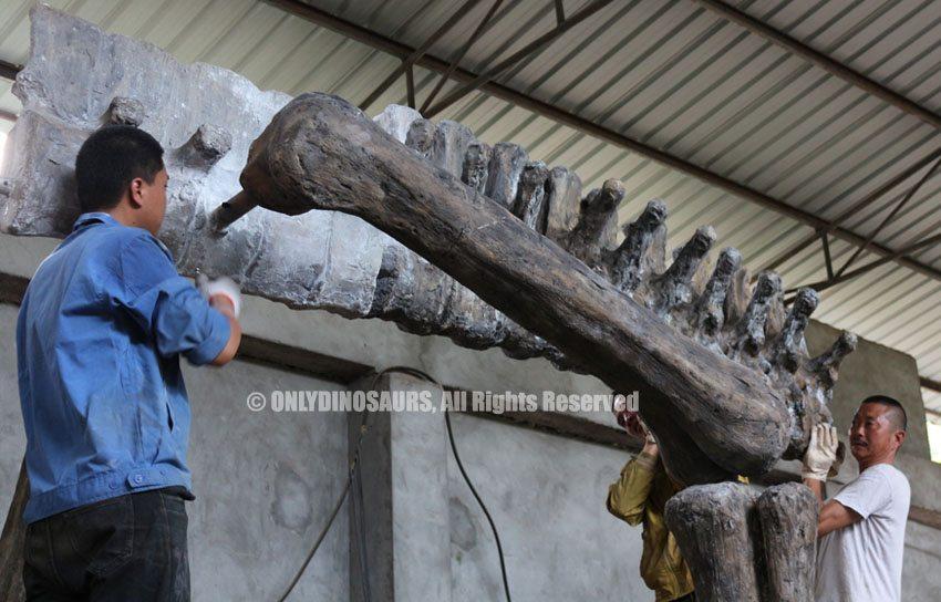 Install-T-Rex-Fossil-Replica