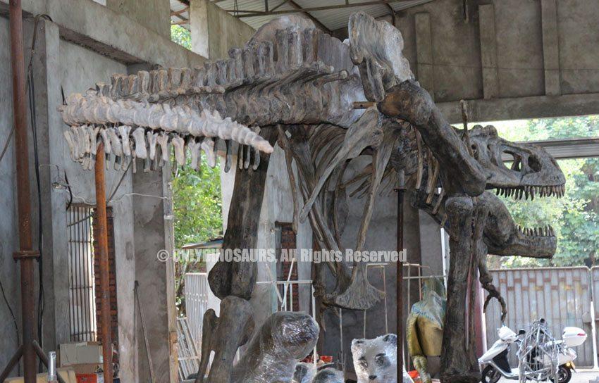 Large T-Rex Fossil Replica