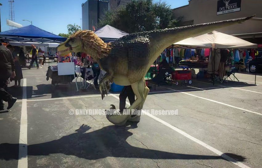 Chacha Raptor in San Antonio