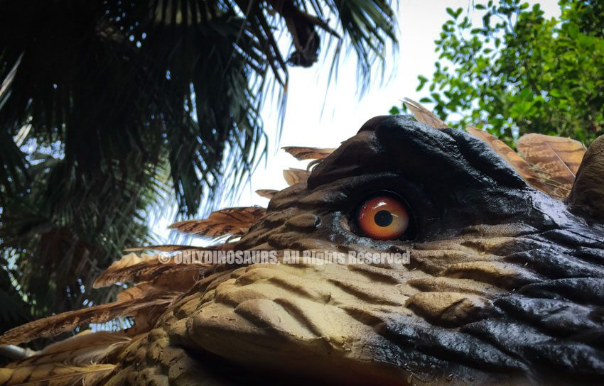 Feathered Raptor Eyes