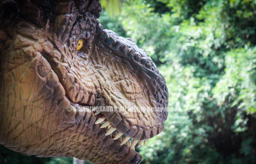 Realistic Tyrannosaurus Rex Costume